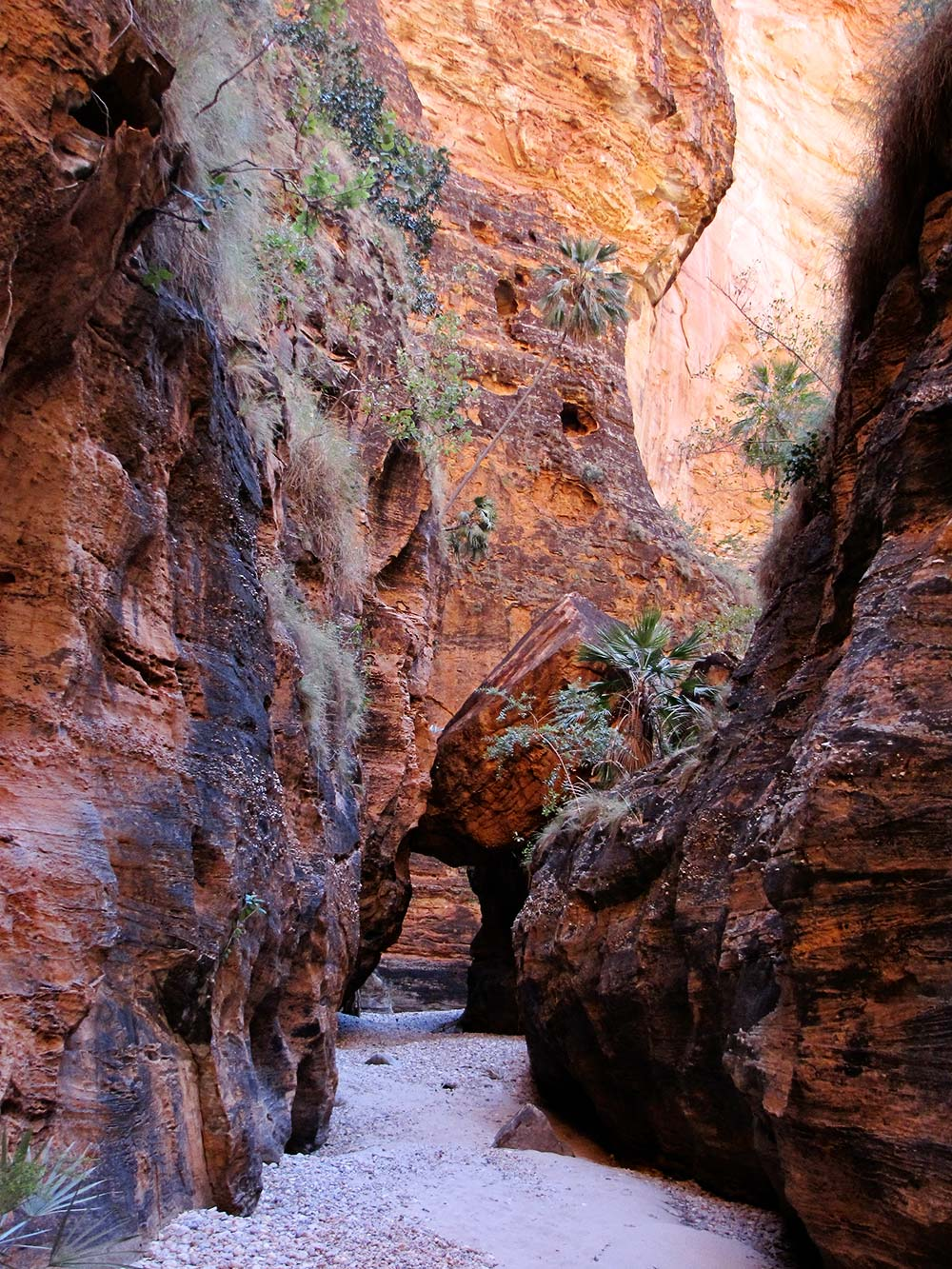 bushwalking second gorge